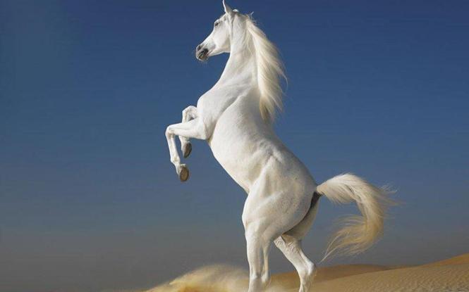 Photos-of-horses-7